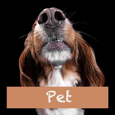 Pet and Animal Photos
