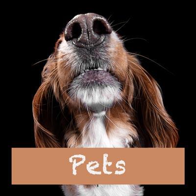 Pet-and-animal-photos
