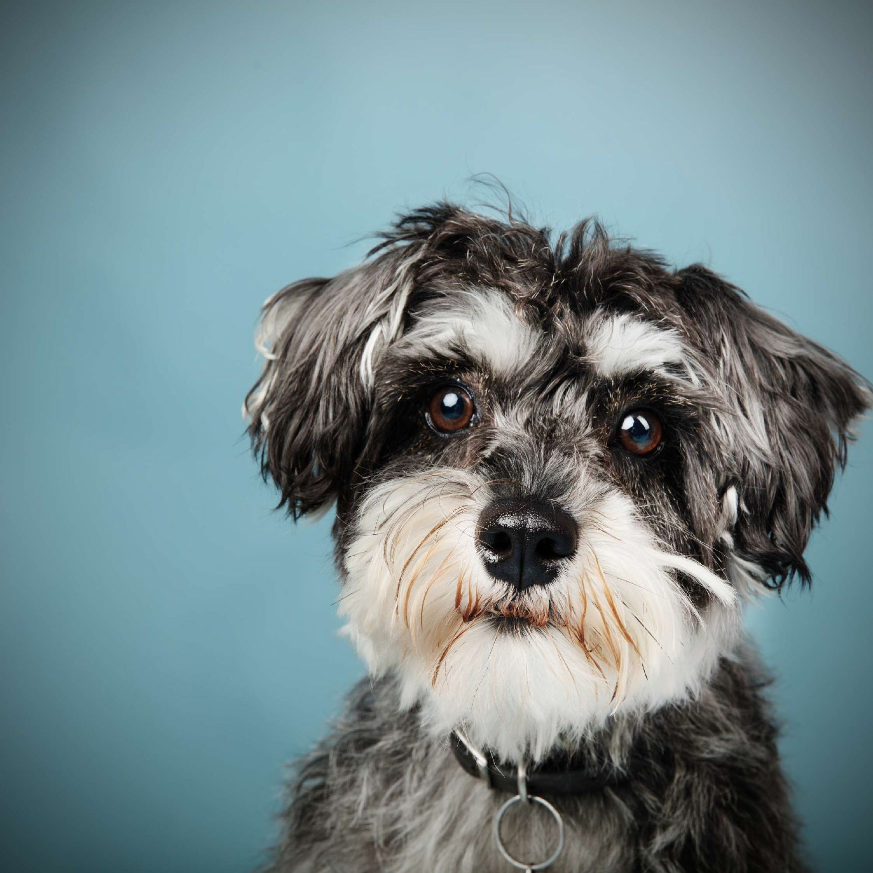 Pet and Animal Photography | ZZZone Photography Studio ...