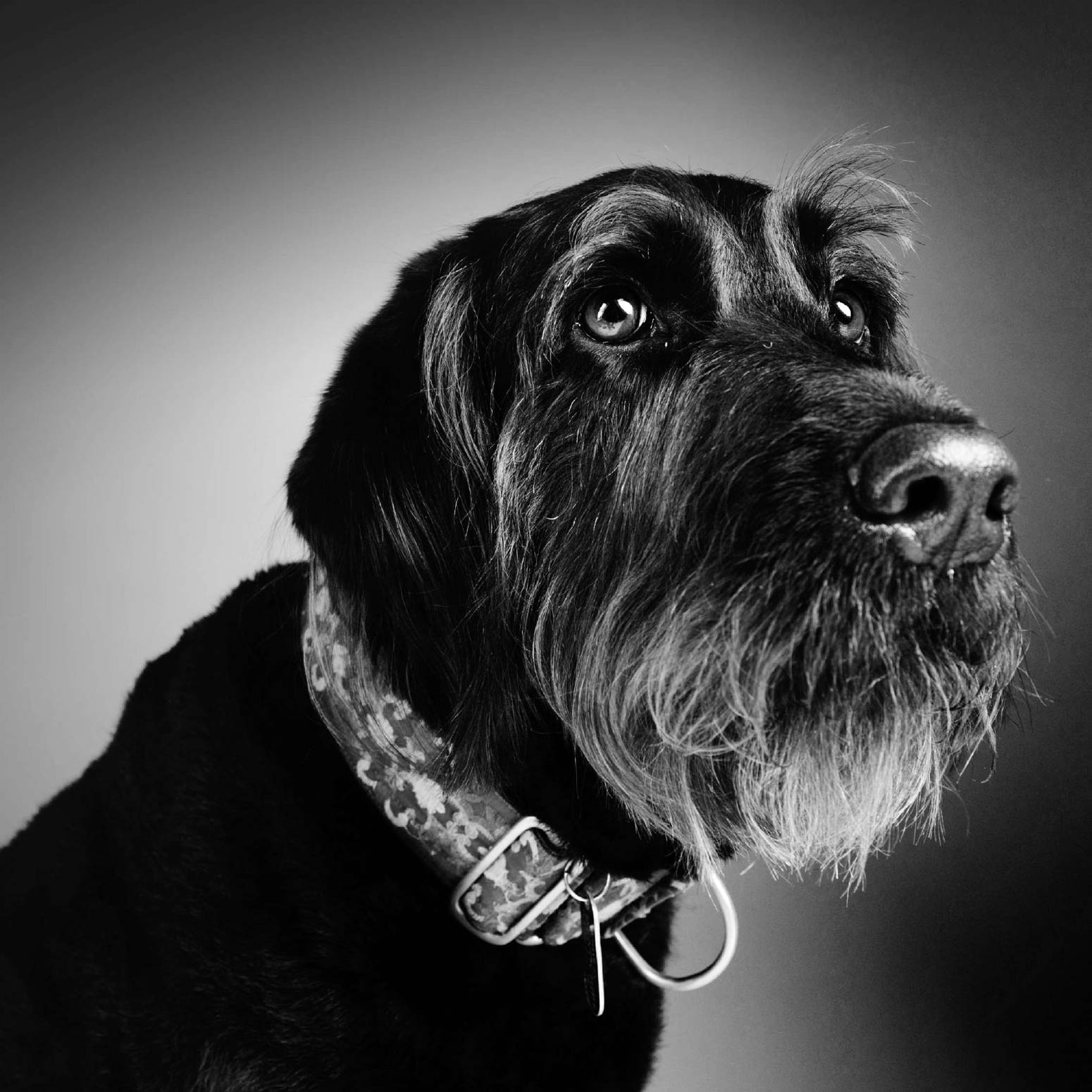 Pet and Animal Photography | ZZZone Photography Studio ...
